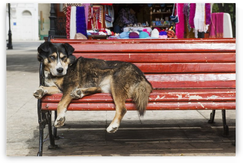 Dog sleeping on a red bench; Punta Arenas, Magallanes, Chile by PacificStock