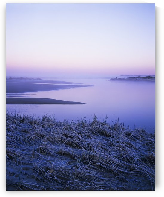 Frost coats the beach grass on the Salt Marsh; Florence, Oregon, United States of America by PacificStock