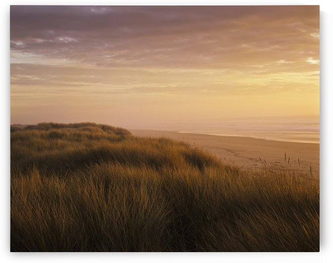 Sunset light bathes Umpqua Beach; Winchester Bay, Oregon, United States of America by PacificStock