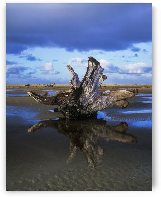 Driftwood found near Siltcoos Beach; Florence, Oregon, United States of America by PacificStock