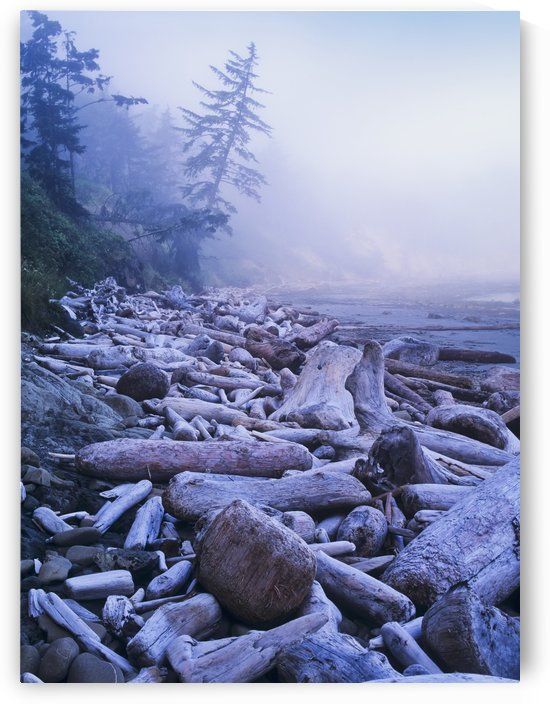 Driftwood piles deeply at North Cove; Charleston, Oregon, United States of America by PacificStock