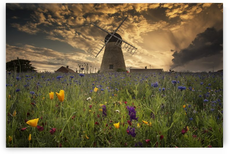 A windmill at sunset with colourful wildflowers in the foreground; Whitburn, Tyne and Wear, England by PacificStock