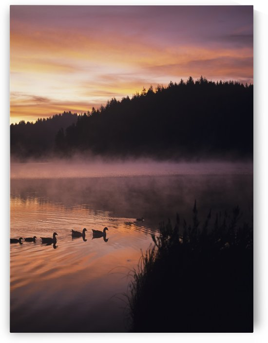 Eel Lake reflects the dawn sky; Winchester Bay, Oregon, United States of America by PacificStock
