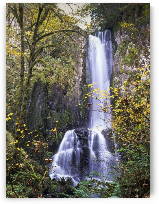 Lower Kentucky Falls, Siuslaw National Forest; Florence, Oregon, United States of America by PacificStock