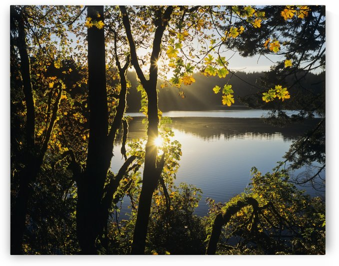 Sunrise reflected in Eel Lake; Winchester Bay, Oregon, United States of America by PacificStock