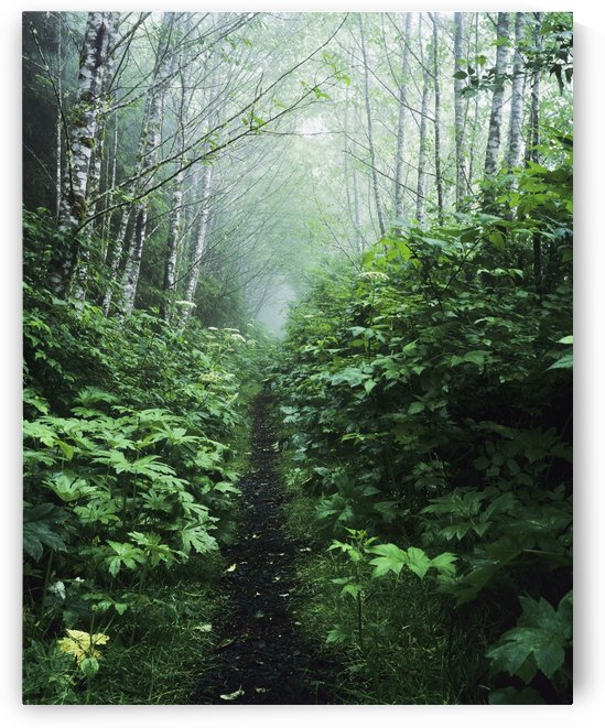 A hiking trail passes through the forest; Florence, Oregon, United States of America by PacificStock