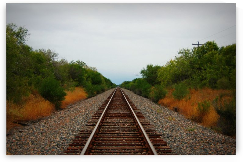 Tracks by Whit Palmer
