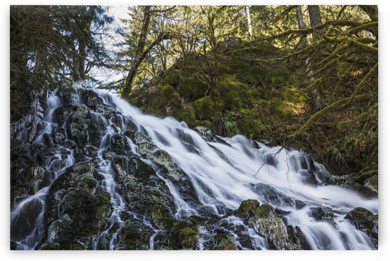 Fishhawk Falls, Lee Wooden County Park; Jewell, Oregon, United States of America by PacificStock