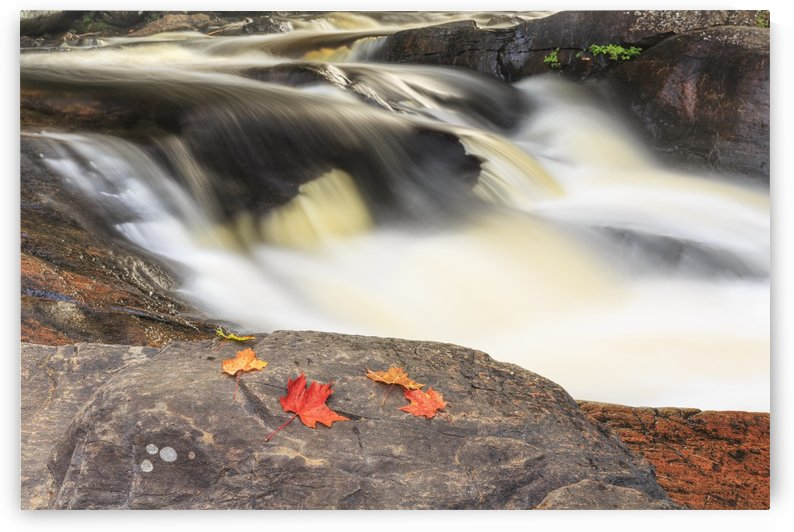 Red maple leaves on rock at Stubb's Falls, Arrowhead Provincial Park, near Huntsville; Ontario, Canada by PacificStock