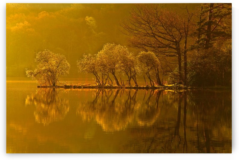 Gold Morning, Lake District, UK by Steve Thompson Sunstormphotography