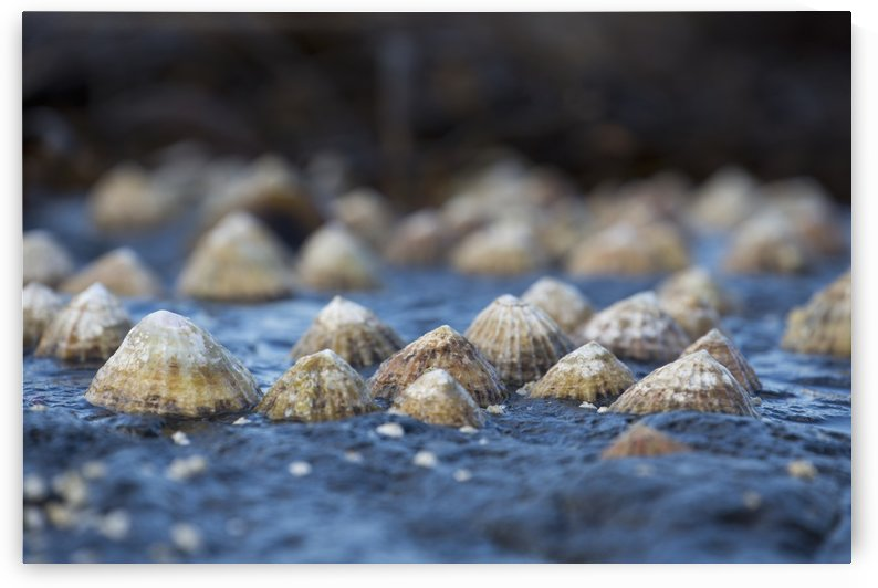 Seashells on a rock; South Shields, Tyne and Wear, England by PacificStock