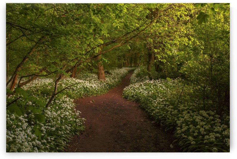 The Path to Fairytales, Ramsons Wood, Lancashire, UK by Steve Thompson Sunstormphotography