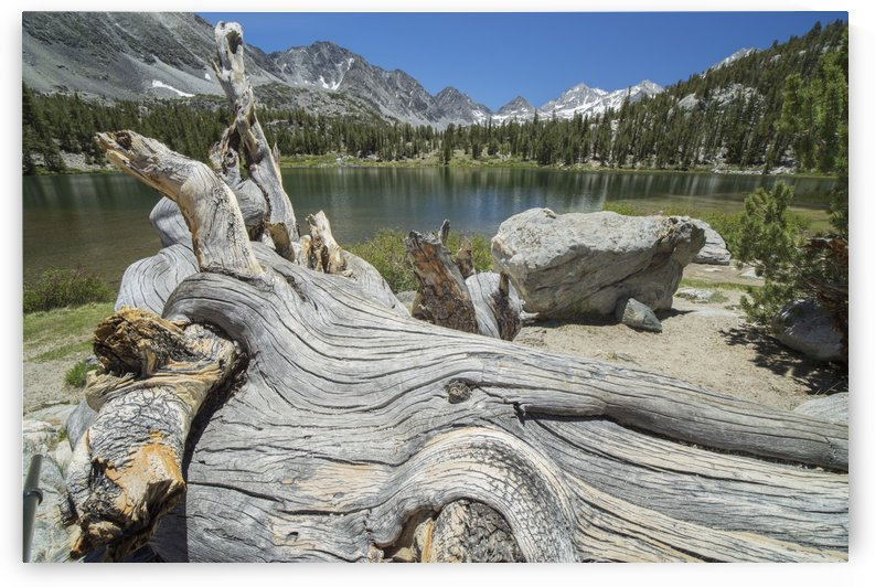 An old tree trunk lays on the shores of an unnamed alpine lake in California's Sierra Nevada Mountains; California, United States of America by PacificStock