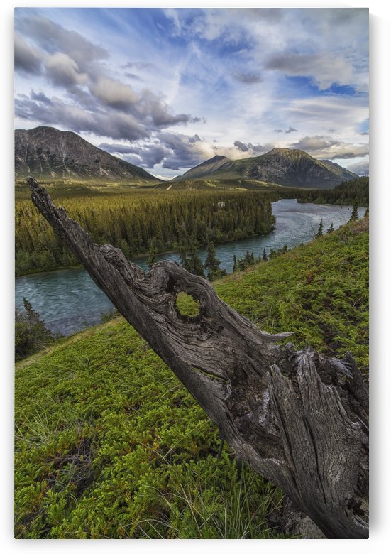 The Takhini River flows throigh a valley near Kusawa Lake, with an old tree stump on the hillside at sunset; Yukon by PacificStock