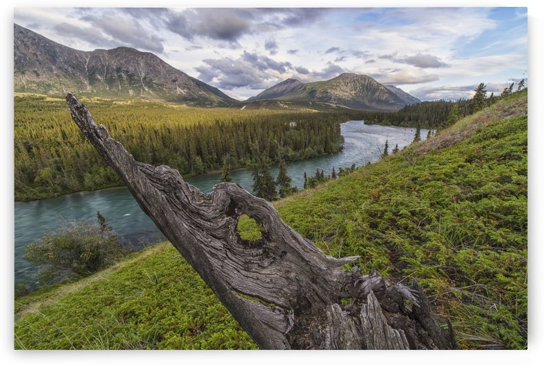 The Takhini River flows through a valley near Kusawa Lake, with an old tree stump jutting from the hillside near sunset; Yukon, Canada by PacificStock