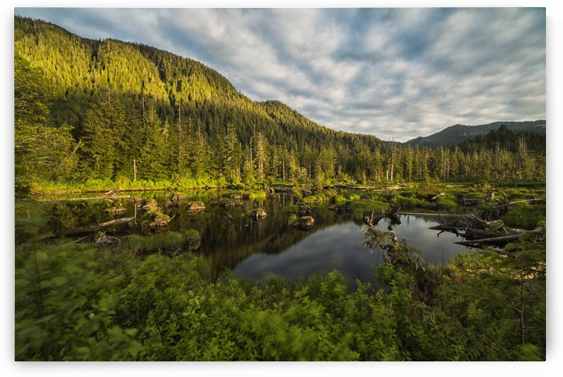 Small pond near Prince Rupert being lit by the setting sun at sunset; British Columbia, Canada by PacificStock