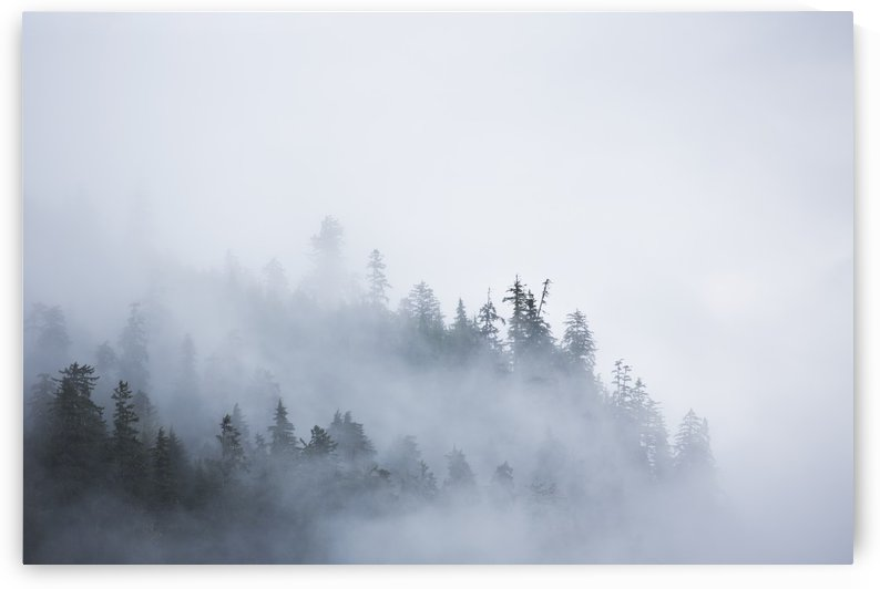 Fog shrouded trees along the British Columbia coastline near Prince Rupert; British Columbia, Canada by PacificStock
