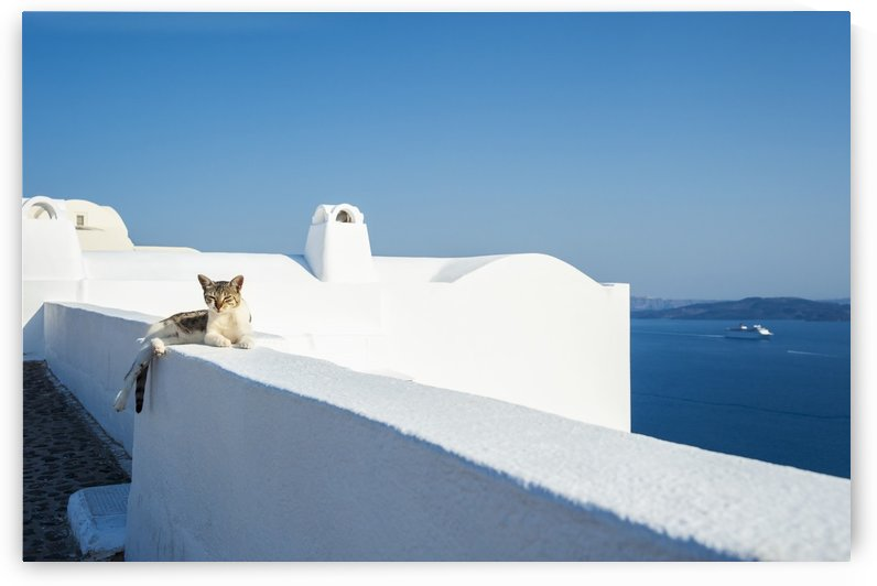 A cat lays on a whitewash wall with a view of the Aegean sea; Oia, Santorini, Greece by PacificStock