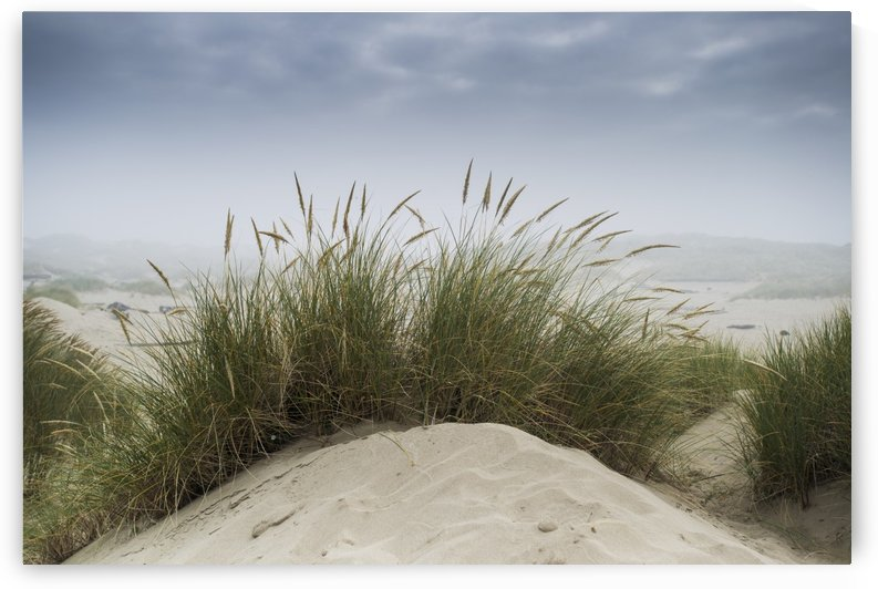 Dune grass along the Oregon coast; Oregon, United States of America by PacificStock