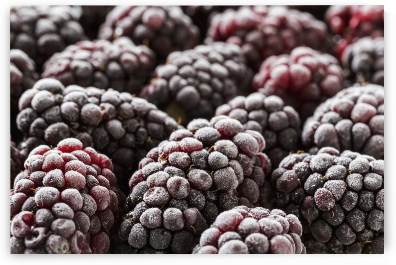 Extreme close up of frosted blackberries; Calgary, Alberta, Canada by PacificStock