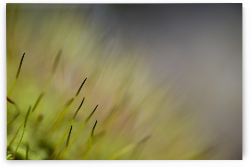 Macro details of the forest floor: Ontario, Canada by PacificStock