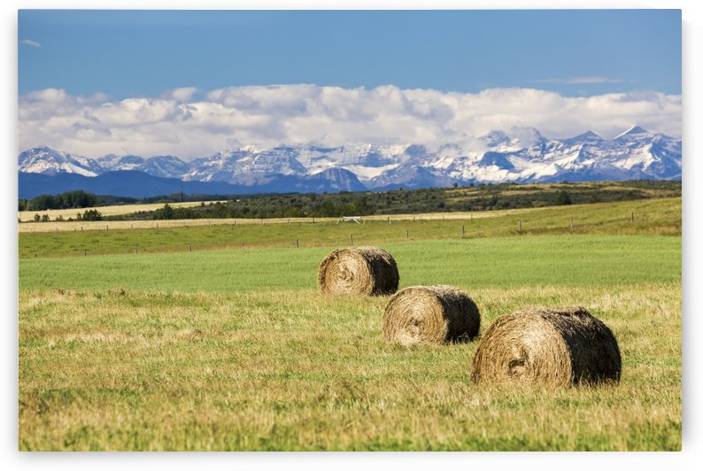 Three hay bales in a field with mountains in the background slightly snow covered and cloudy with blue sky; Alberta, Canada by PacificStock