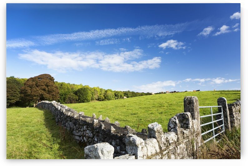 Rock fence with metal gate and grassy hillside with cattle grazing, trees and blue sky and clouds, North of Kilrush; County Clare, Ireland by PacificStock