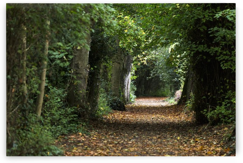Leaf covered pathway in dense forest with sunlight in the distance; Cahir, County Tipperary, Ireland by PacificStock