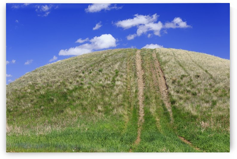Tire tracks on a grassy hill; Cypress Hills, Saskatchewan, Canada by PacificStock