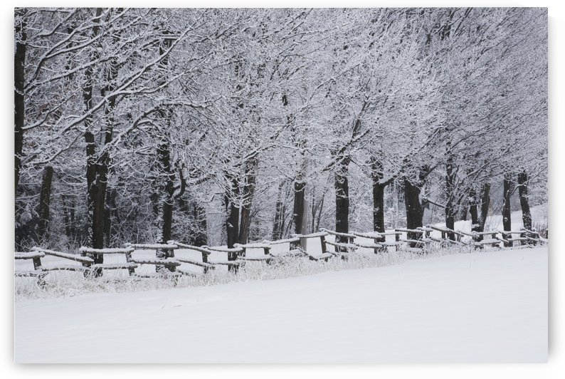 Snow covered trees along a fence and field in winter; Bromont, Quebec, Canada by PacificStock