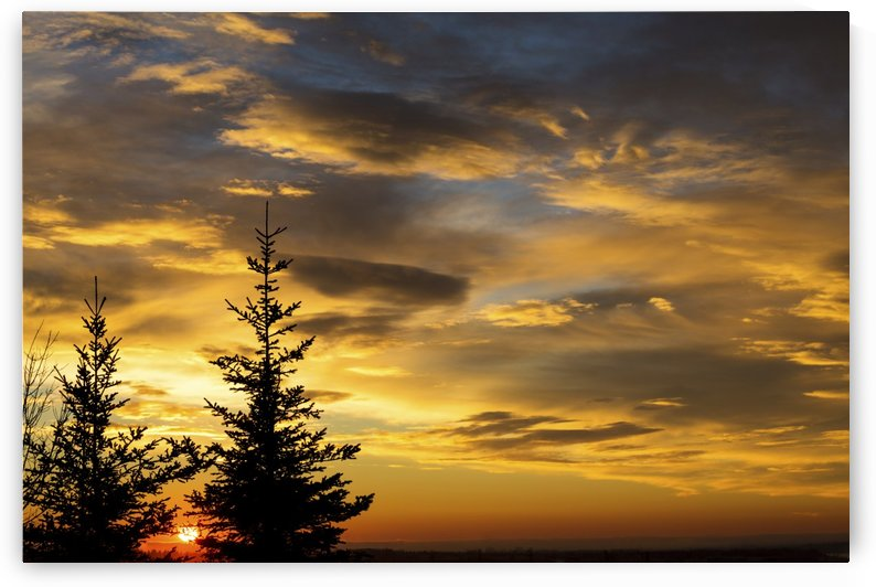 Silhouette of two evergreen trees with dramatic colourful clouds with sunrise; Calgary, Alberta, Canada by PacificStock