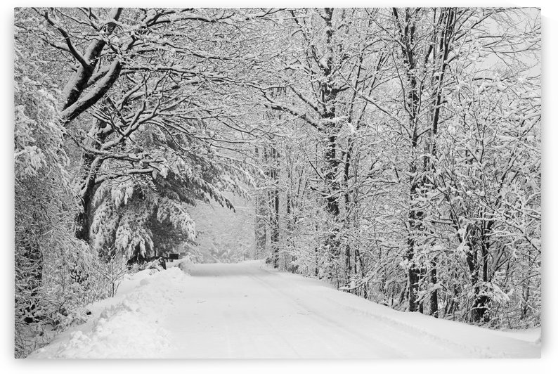 A snow covered road lined with leafless trees in winter; Brome Lake, Quebec, Canada by PacificStock