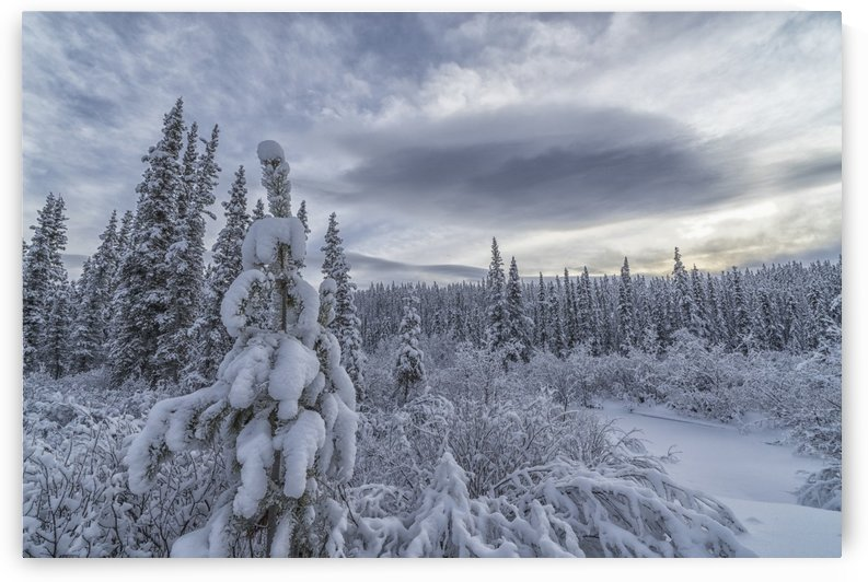Clouds and mist envelop the mountains while snow covers the trees and shrubs during winter along the Annie Lake Road, near Whitehorse; Yukon, Canada by PacificStock