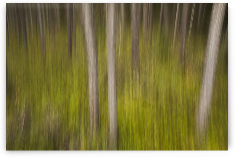 Motion blur of trees; Ontario, Canada by PacificStock