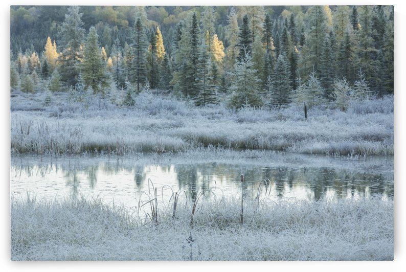 Early morning over Costello Creek, Algonquin Park; Ontario, Canada by PacificStock