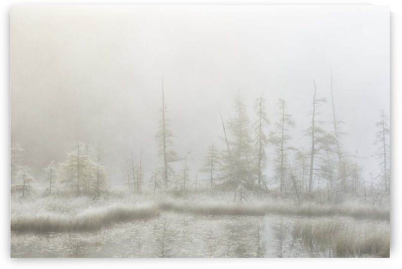 Early morning mist over a small pond along the Rock Lake Road, Algonquin Park; Ontario, Canada by PacificStock