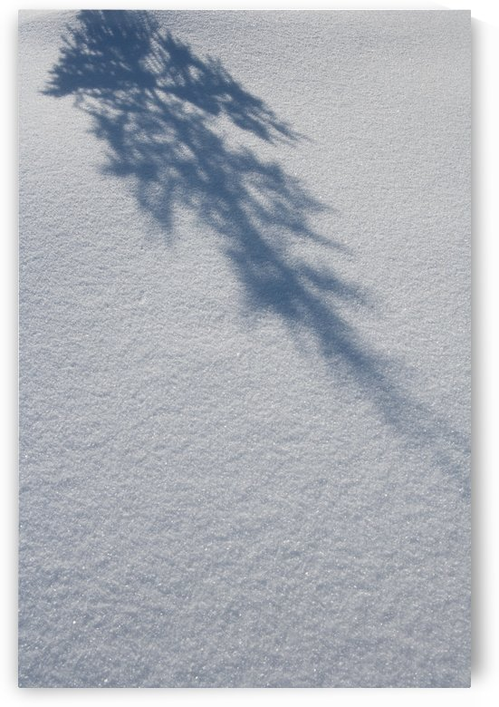 Shadow of a fir tree falls across a pristine drift of snow, sparkling in the sun; Filzmoos, Austria by PacificStock