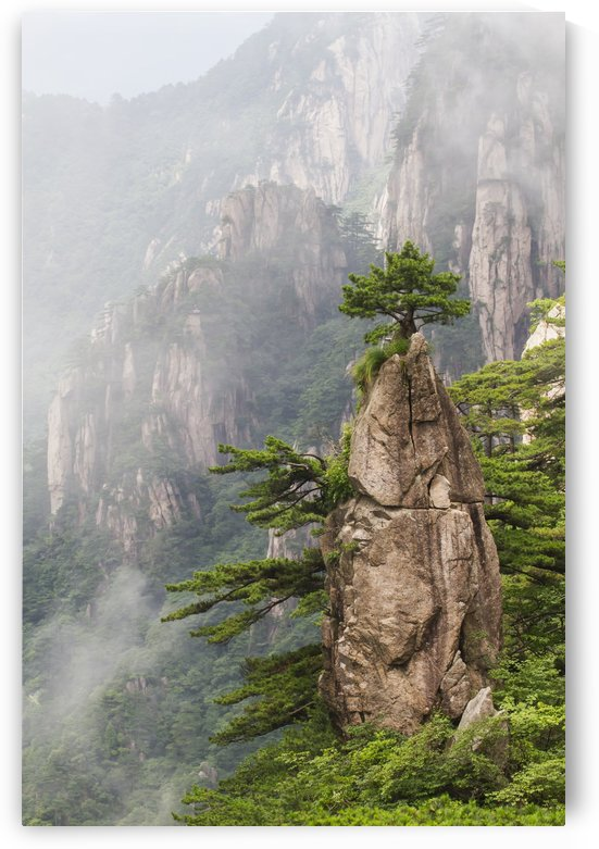 A Flower Blooming on a Brush Tip formation in the North Sea Scenic area, Mount Huangshan, Anhui, China by PacificStock