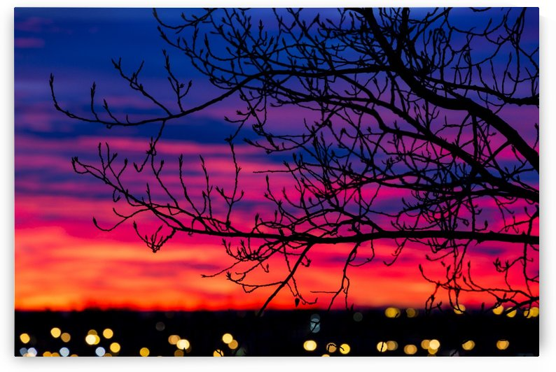 Close up of silhouetted tree branches with dramatically colourful clouds at sunrise with blurred city lights; Calgary, Alberta, Canada by PacificStock