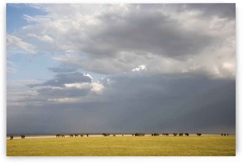 Herd of elephants with dramatic clouds in Lake Manyara National Park; Tanzania by PacificStock