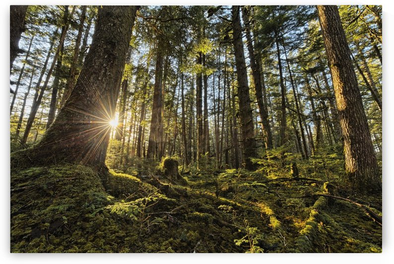 Sunlight streams through the rainforest of Naikoon Provincial Park which is on Haida Gwaii; British Columbia, United States of America by PacificStock