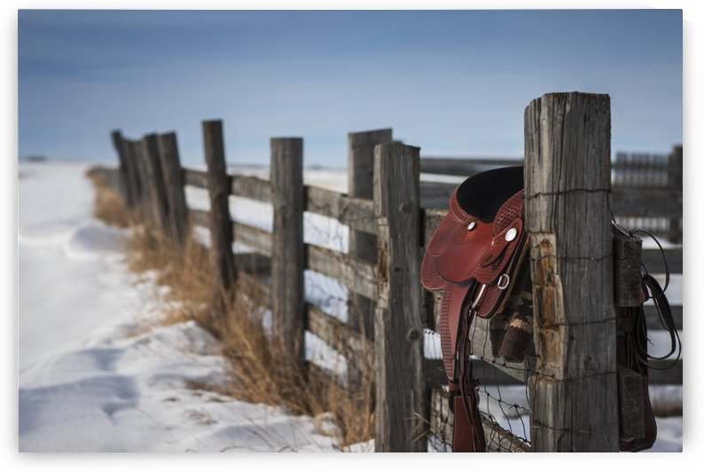 Saddle hanging on a wooden fence in winter; Regina, Saskatchewan, Canada by PacificStock