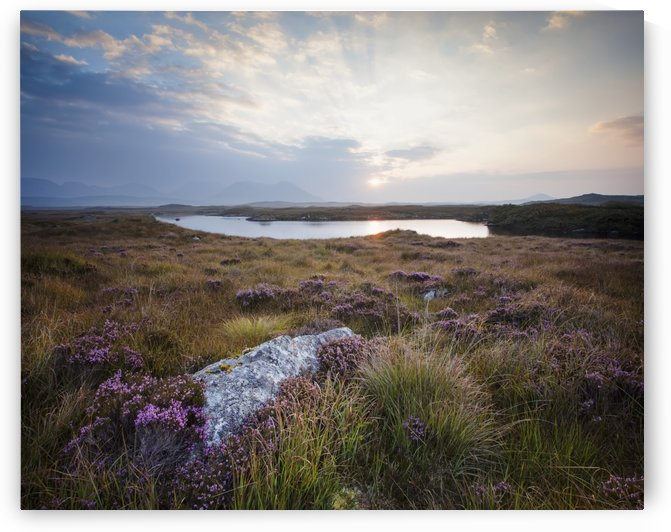 Daybreak over Connemara Bog with heather in bloom; County Galway, Ireland by PacificStock