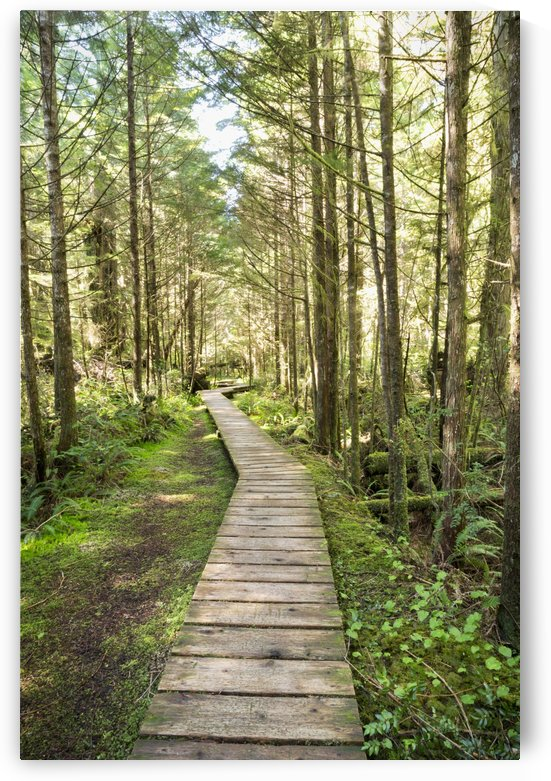 Forest walk, Pacific Rim National Park; Vancouver Island, British Columbia, Canada by PacificStock