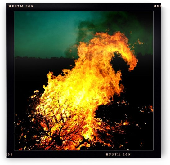 Firedragon by Ulf Bley