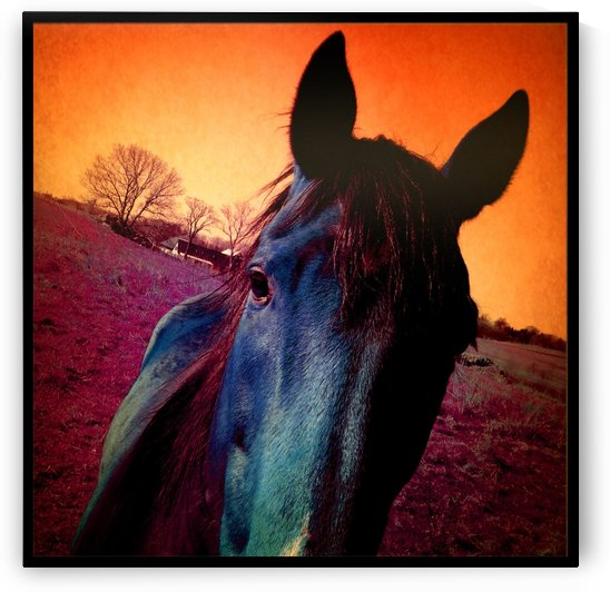 Sunset Horse  by Ulf Bley