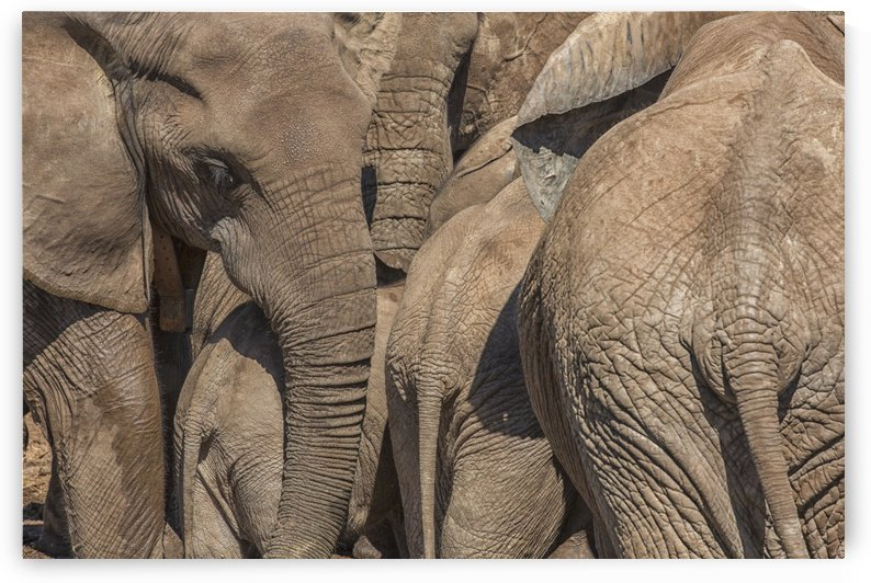 Elephants gather at a watering hole in Addo Elephant National Park; South Africa by PacificStock