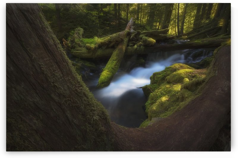 Panther Creek; Washington, United States of America by PacificStock