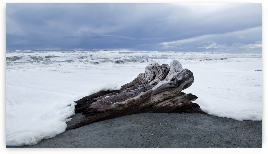 West Coast surf approches driftwood tree stump that has been washed up; South Island, New Zealand by PacificStock