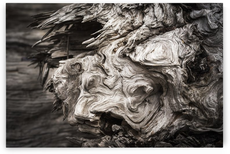 Patterns are found in the driftwood at Willapa Bay on the Washington Coast; Bay Center, Washington, United States of America by PacificStock